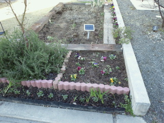 冬の花壇 2
