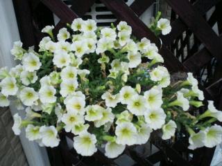 今年の花その2